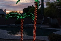 Review the Best Christmas Palm Tree 2020 – Consumer Reports